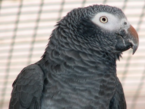 hand rearing parrots guide